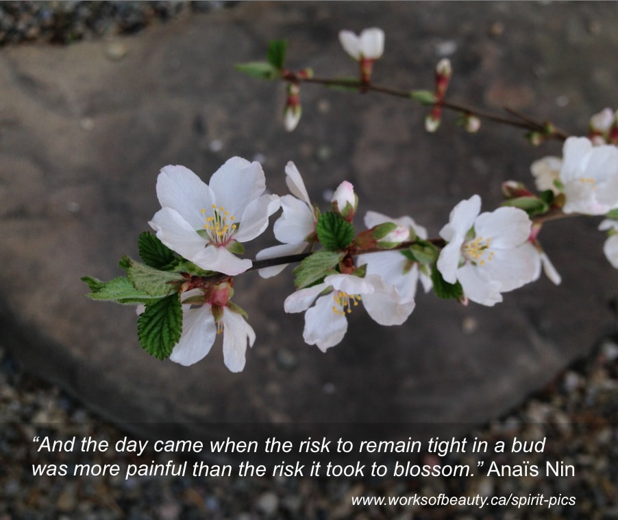 Picture of a blossom with quote